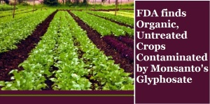 cfl-graphic-organc-farms-contaminated-by-glyphosate