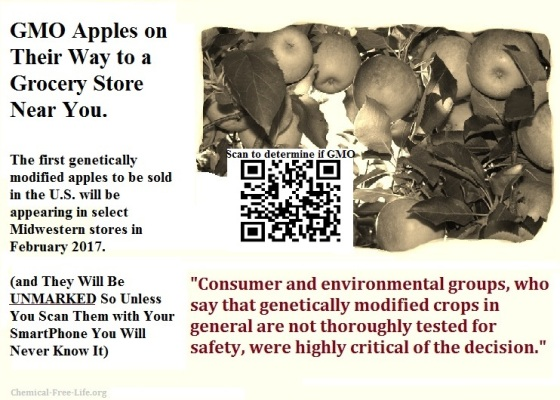 cfl-graphic-gmo-apples-unmarked-coming-to-us-in-2017
