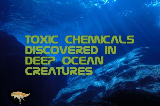 toxic-chemicals-in-deep-ocean-creatures
