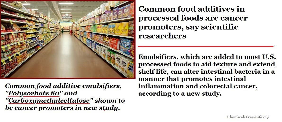 These Common Food Additives Promote Cancer Scientific Research Chemical Free Life