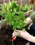 organic-gardening 2