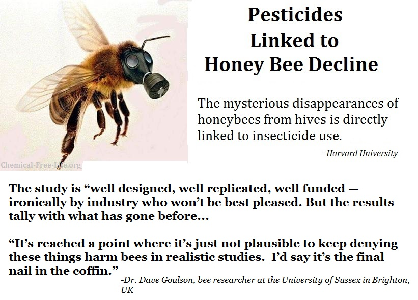 pesticides killing bees largest study