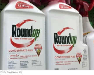 roundup weedkiller concentrate
